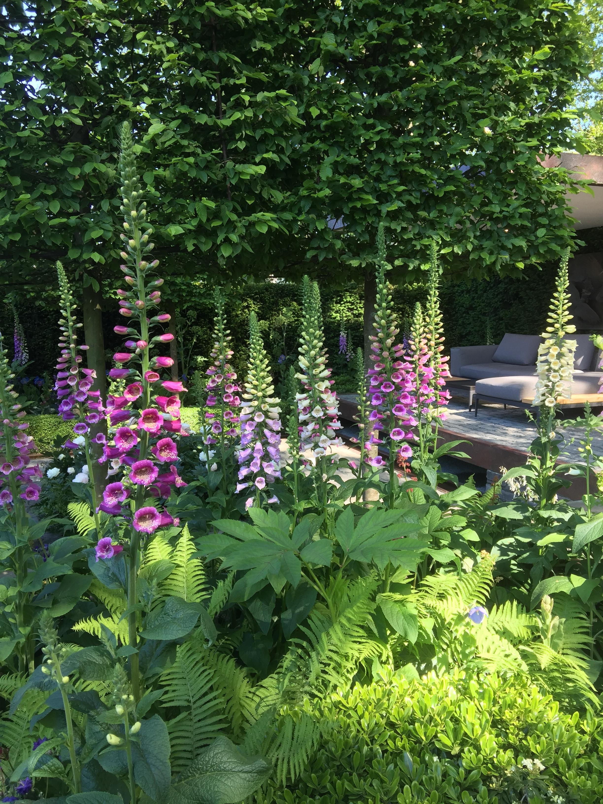 Chelsea Flower Show 2016 Julia Wilmot Writer Inspiring Stories